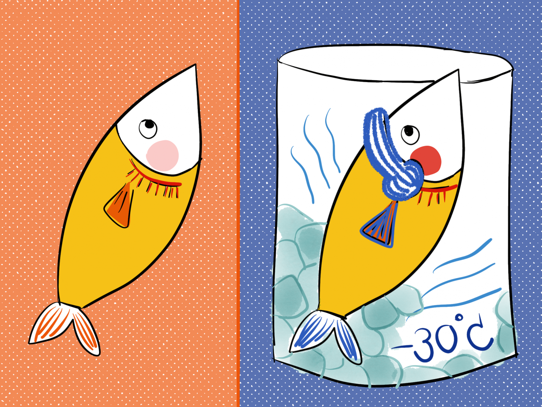 ปลาแช่แข็งดีไหม